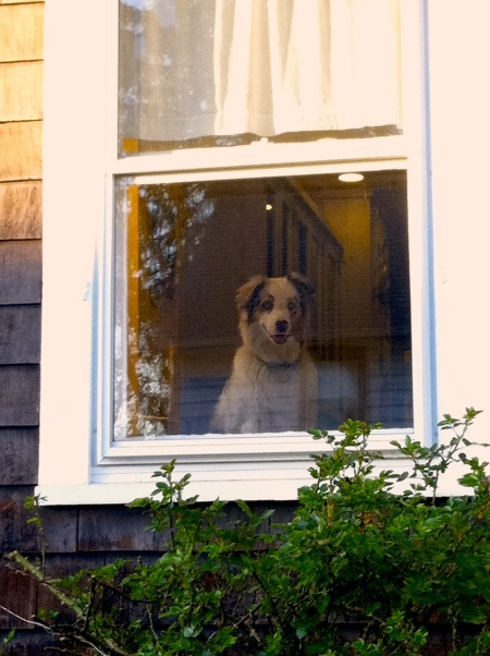 Doggywindow