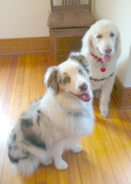 Cookie&Annie