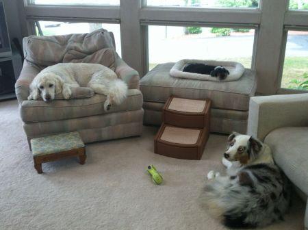 canine cousins