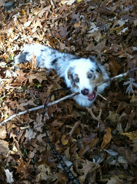 leaves&stick
