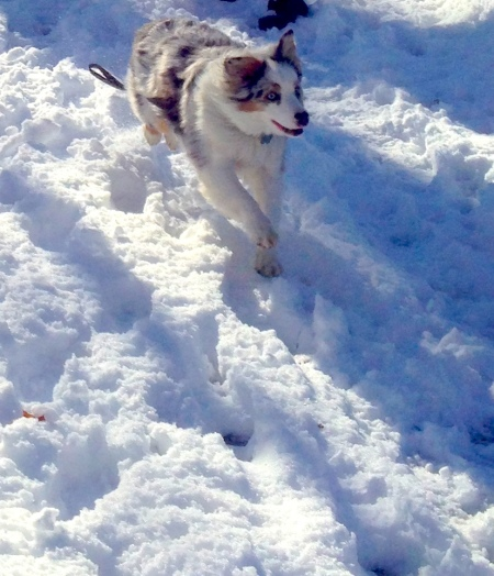 Snow wolf cropped